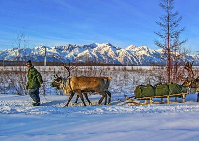 Reindeer herders' migration. The Mountains of the North Lake Baikal. The Republic of Buryatia. Russia