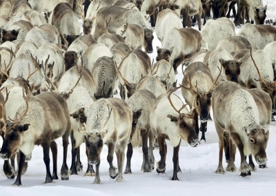 Gulags and Nomads in the Kodar Mountains – Winter