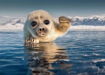 A baby baikal seal on the Ushkani Islands. Republic of Buryatia